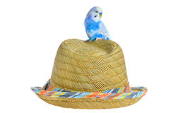 Parrot on a straw hat. Blue parrot on a straw hat isolated Royalty Free Stock Images
