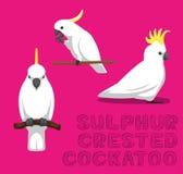 Parrot Sulphur-Crested Cockatoo Cartoon Vector Illustration. Animal Cartoon EPS10 File Format Royalty Free Stock Photography