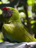 Parrot Swag Stock Photo