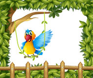 A parrot swinging the vine plant Stock Image