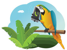 Parrot is talking on the smart phone Royalty Free Stock Images