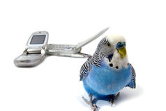 Parrot and telephones Royalty Free Stock Images
