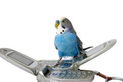 Parrot and telephones Stock Image