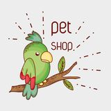 Parrot on tree branch pet shop. Vector illustration graphic design Stock Images