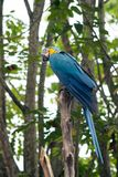 Parrot on tree branch in a zoo. A blue and yellow parrot sitting on a branch during daylight Stock Photography