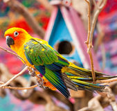 Parrot on a Tree Branch Royalty Free Stock Image