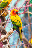Parrot on a Tree Branch Royalty Free Stock Photography