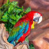 Parrot on a Tree Branch Stock Photos