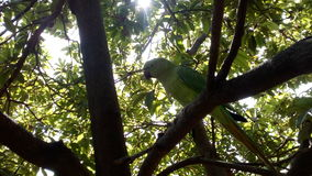 Parrot on tree looking naturally Stock Images