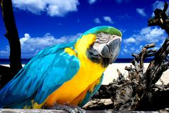 Parrot on tropical beach. Colorful parrot sitting on tropical beach, blue sky Stock Photo
