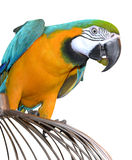 Parrot tropical Stock Image