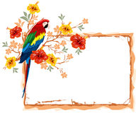 Parrot and tropical flowers Royalty Free Stock Image