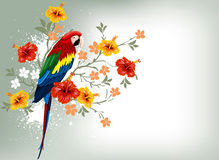 Parrot and tropical flowers Royalty Free Stock Images
