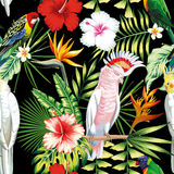 Parrot tropical flowers and leaves seamless pattern black backgr Stock Photos