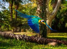 Parrot in tropical landscape Stock Images