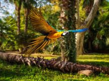 Parrot in tropical landscape Royalty Free Stock Images