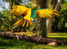 Parrot in tropical landscape Stock Photos
