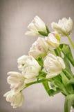 Parrot tulip arrangement Stock Images