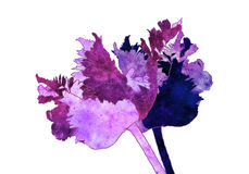 Parrot tulip illustration. With old paper texture on white background Stock Photo