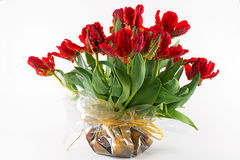Parrot Tulips Royalty Free Stock Image