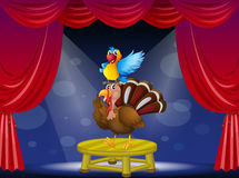 A parrot and a turkey at the stage Stock Photos