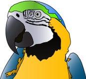 Parrot. Vector of a parrot vector illustration