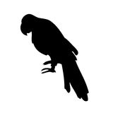 Parrot vector silhouette Stock Photos