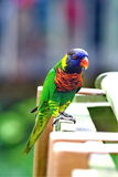 The parrot  1. Very beautiful feathers.This parrot value sum Royalty Free Stock Photography
