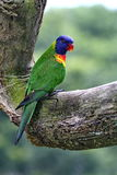 The parrot  2. Very beautiful feathers.This parrot value sum Royalty Free Stock Images