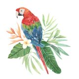 Parrot Watercolor Floral Flowers Leaves Plumeria Tropical Hibiscus. Parrot Hand Painted Watercolor tropical Plumeria and Hibiscus Florals. Elegant Bird of royalty free illustration