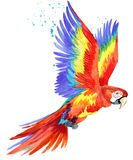 Parrot. Watercolor Parrot illustration. Tropical bird watercolor. Stock Image