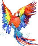 Parrot. Watercolor Parrot illustration. Tropical bird watercolor. Stock Photo