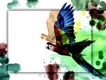 Parrot on white background banner and watercolor stains. Royalty Free Stock Photos