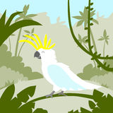 Parrot White Cockatoo Sitting on Tree Branch. Tropical Jungle Flat Vector Illustration Royalty Free Stock Image