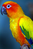 Parrot. Is a Wildlife Animal stock images
