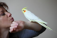 Parrot and woman Stock Photography