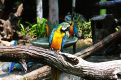 Parrot on Wood Branch Near Water Fountain Royalty Free Stock Photography