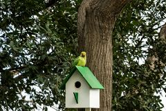Parrot on wooden birdhouse on a tree royalty free stock photo