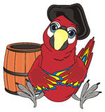 Parrot and wooden object. Pirate red parrot in black hat sit with empty wooden barrel Royalty Free Stock Photos
