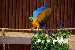 Parrot yellow blue. Vibrant, exotic, wings, beautiful colorful parrot tame, staring zoo fun, beauty color rather interesting color, nature, beak, bright yellow Stock Photo