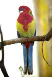 Parrot in the zoo Stock Images
