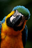 Parrot. In zoo Stock Photo