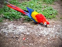 Parrot. In zoo Royalty Free Stock Images