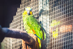 Parrot in zoo Royalty Free Stock Image