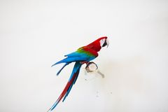 Parrot in zoo Royalty Free Stock Photos