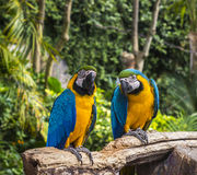 Parrot zoo branch wood Stock Image