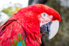 Parrot at zoo Royalty Free Stock Images