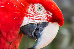 Parrot at zoo Stock Image