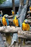 Parrot in zoo Thailand,Safari world Royalty Free Stock Photo