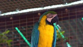 Parrotclose Ara вверх сток-видео
